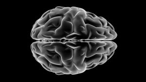 Image of brain from top.